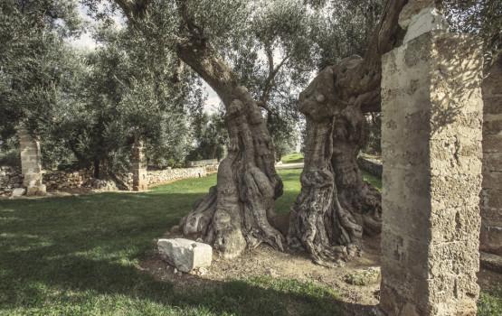 Puglia - Murgia dei Trulli - Italy